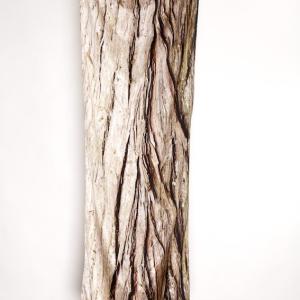 swamp cypress 100% silk scarf