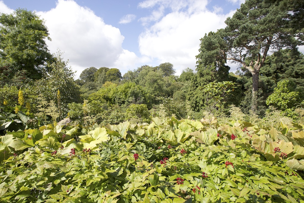 Royal Botanic Garden Edinburgh Howard Guest