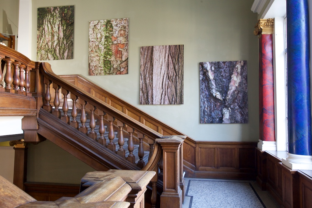 Bark prints on the main stairway at Summerhall, Edinburgh