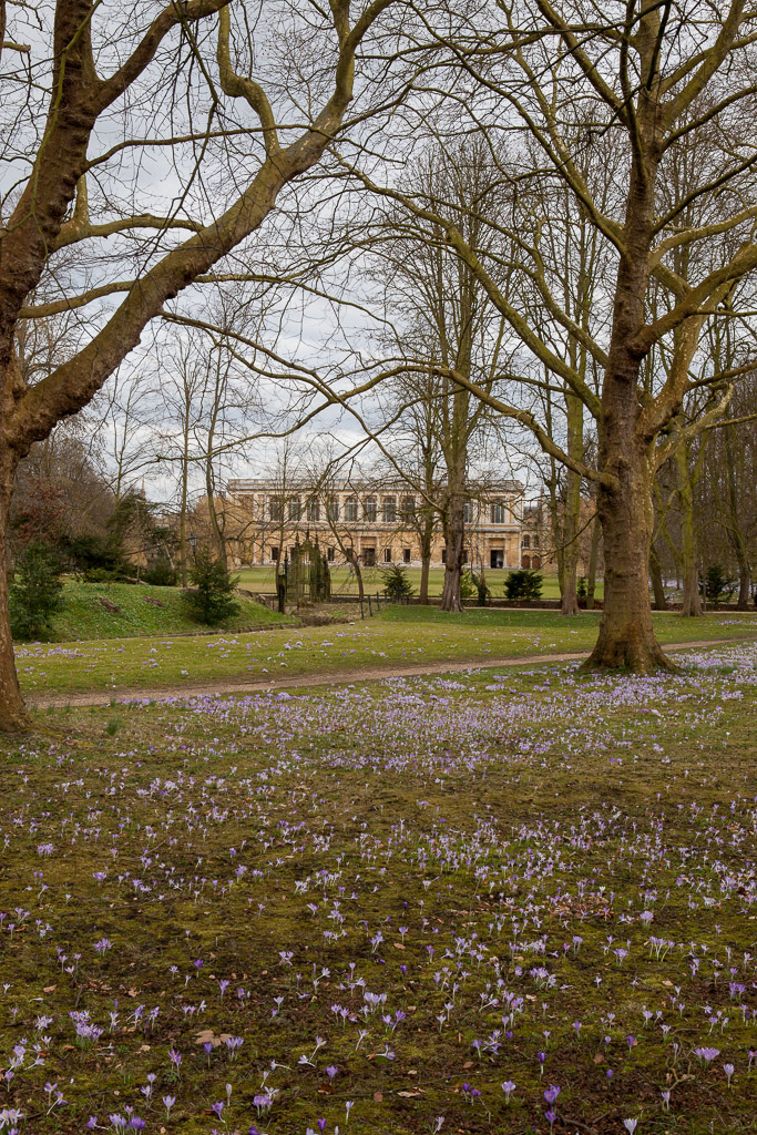 Wren Library, Trinity College Cambridge, from the backs, spring flowers